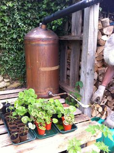 Re-purposed hot water cylinder as garden water butt, on raised wood palette base.
