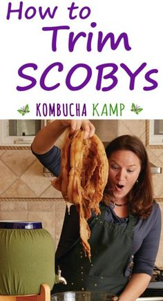Trim SCOBYs to improve the taste and health of your Kombucha brew. Learn to divide or cut SCOBYs safely, and when to clean or reset your SCOBYs here. Kombucha Flavors, Kombucha Scoby, How To Brew Kombucha, Kombucha Brewing, Continuous Brew Kombucha, Kombucha Benefits, Scoby Hotel, Fermentation Recipes, Homebrew Recipes