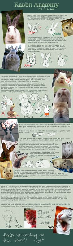 Rabbit Anatomy / Part 1: the head by upui.deviantart.com on @DeviantArt
