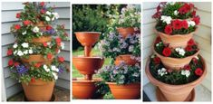Nápady a Tipy My Flower, Flower Power, Flowers, House Design Pictures, Container Gardening, Garden Design, Planter Pots, Herbs, Beautiful