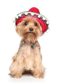 www.pamperedpetstravel.com  #travel #trip #traveling #PetTravel #dog #dogs #puppy #puppies #pet #pets #cute #CuteDog #Costume