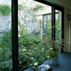 Vue du patio planté de Clématites, chèvrefeuille, Hortensia et lierre Shamrock