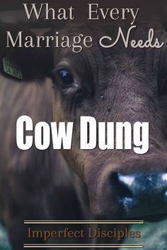 What  Every Marriage Needs: Cow Dung