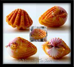 Whole Sunrise Shells ~ Pairs!  Monica's Blog