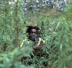 *Peter Tosh* In a field of marijuana, Westmoreland, Jamaica, 1975. More fantastic pictures and videos of *The Wailers* on: https://de.pinterest.com/ReggaeHeart/ ©Lee Jaffe/ gettyimages.com