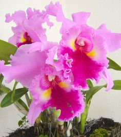 Orquideas by AgusValenz, via Flickr