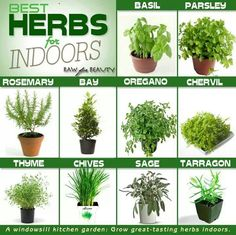 Herbs For Indoors #herbs #gardening #indoor
