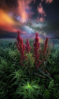~~Phase Of Evolution | flower field astrophotography | by Daniel Greenwood~~