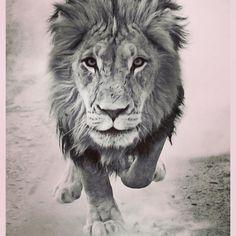 """612 mentions J'aime, 9 commentaires - Laura Smet (@laura_smet_) sur Instagram: """"Journée du Lion #beauté #force #inspirationpourleshumains ❤️"""""""