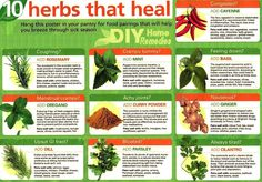 DIY Home Remedies: Uncovering the Mysteries of Medicinal Herbs