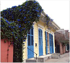 Morning glories on french quarter home