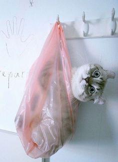 CAT-il donc fait ? pour se trouver ainsi suspendu en punition !