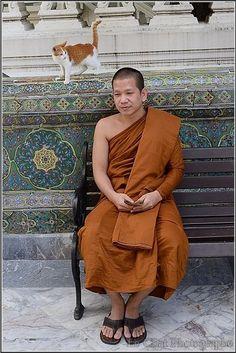 Le moine Thailandais et le chaton roux