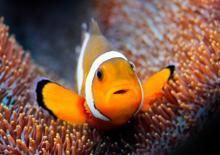 Los peces también son seres vivos.