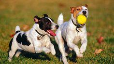 Cómo enseñar a tu perro a traer la pelota: cuidados y nombres para tu mascota. Perro y pelota