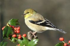 Plants that attract Birds in all seasons