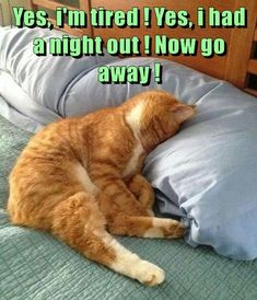 67 Ideas Funny Pets Humor Hilarious Cats For 2019 Funny Good Morning Memes, Good Morning Funny Pictures, Funny Animal Pictures, Dog Pictures, Funny Animals, Cute Animals, Morning Pics, Good Morning Cat, Bad Morning