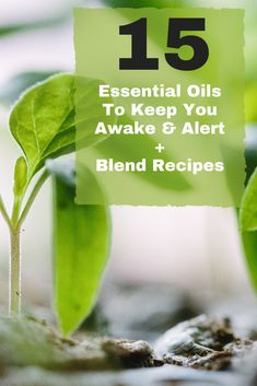 How to Use Essential Oils to Stay Awake is part of How to stay awake Sometimes it's difficult to stay awake Many Westerners survive by grabbing an extra cup of coffee Even coffee lovers will agr - Best Oils, Doterra Essential Oils, Young Living Essential Oils, Essential Oil Blends, Coaching, Essential Oil Perfume, Diffuser Blends, Essentials, How To Stay Awake During The Day