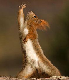 Cool squirrel