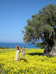 Spring in Cyprus under a really old olive tree