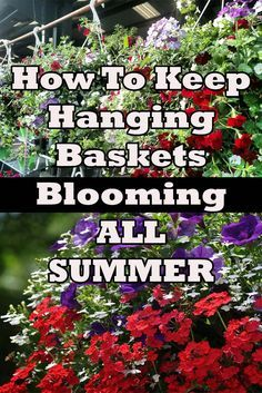 3 Keys To Keep Hanging Baskets Blooming And Beautiful All Summer! Shade Plants Container, Container Flowers, Container Gardening, Planting Flowers, Flowers Garden, Flower Planters, Garden Trees, Garden Planters, Flower Gardening