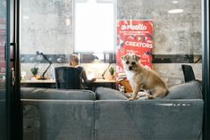 The Rise of Coworking - Some coworking spaces are pet-friendly like this WeWork location in Santa Monica, California. Innovative Office, Corporate Office Design, Coworking Space, Santa Monica, Corner, Tours, Pets, Design Ideas, California