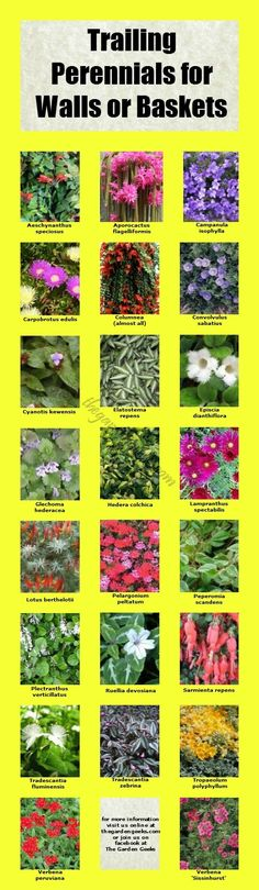 Trailing Perennials for Walls and Baskets. See it first on facebook!