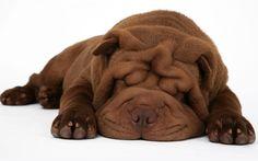 #travelDOGether il piacere del cioccolato ha solo 2 zampe ... http://www.dogfather.it/cioccolati-italiani-happy-dogether/