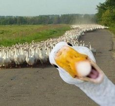 There's always one in a crowd! Hello, it's a nice day for a country run!!!!