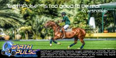PEMF therapy for Equines (Horses and Camels) results in performance enhancement for race horses and in general benefits the health of Equines
