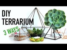 DIY GEOMETRIC GLASS TERRARIUM | THE SORRY GIRLS - YouTube