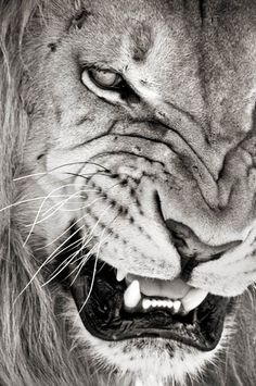 rrrooaarrr - Click image to find more Science & Nature Pinterest pins