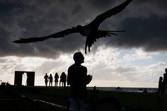 Magnum PhotosDavid Alan Harvey PUERTO RICO. Isabela. 2015. Harrie Anguita feeding pelicans at Crash Boat