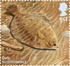 Undated handout photo issued by Royal Mail from their Sustainable Fish Special Stamps issue showing a Dab