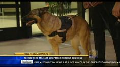 Hero war dog on her final mission: Retirement - San Diego, California News Station - KFMB Channel 8 - cbs8.com#.T_dq4H3FgMo.facebook