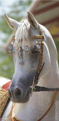 The White Horse With The Jewel Harness