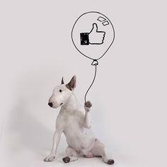 Jimmy. O Bull Terrier brasileiro que anda famoso no Instagram. – Ohpera Blog | design, art lifestyle, viagem e sonhos.