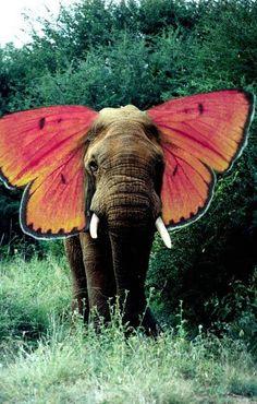 Elephant/Butterfly