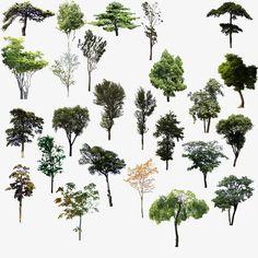 PSD de árvores, As árvores, Ramos, A MadeiraPNG e PSD