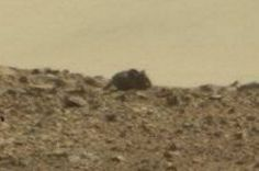Mouse Mars
