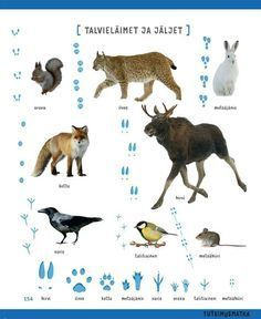 Winter animals from Finland Early Education, Early Childhood Education, Science Education, Finnish Language, Montessori Materials, Animal Sketches, Forest Animals, Science And Nature, Pre School