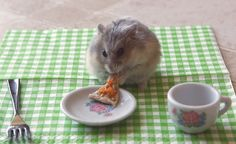 Chubby Angel!: Hamster Eating A Teensy Slice Of Pizza