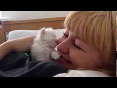 Tiny Kitten Kisses Are The Best - http://www.thecutestkitties.com/tiny-kitten-kisses-are-the-best/