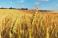 Kara Kuumana: Mitä kylvää, sitä niittää