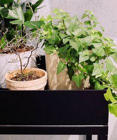 RoomGardens Terra - Unser Premiu-Pflanzentisch // Our premium plant table #roomgardens #interiordesign #plantlovers #greenthumb Natural Interior, Interiordesign, Herbs, Nature, Instagram Posts, Plants, Naturaleza, Herb, Natural Styles
