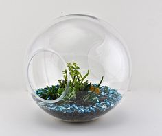 Surreal yet real terrarium with Succulents