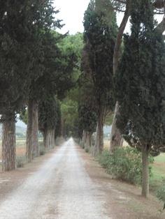 Pine tree entrance. Punta Ala, Toscana