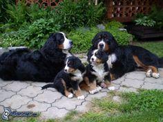 Family companion