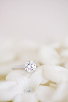 #rings Photography by ktmerry.com  Read more - http://www.stylemepretty.com/2011/10/03/miami-wedding-by-kt-merry-photography/