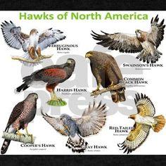 Hawks of North America Dark T-Shirt by Wildlife - CafePress Hawk Species, North American Animals, Hawk Bird, Bird Identification, Animal Tracks, Bird Poster, Wild Creatures, Mundo Animal, Backyard Birds